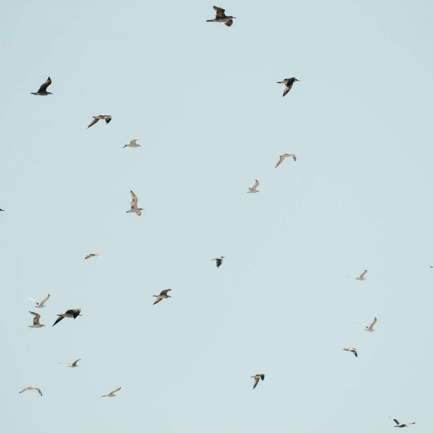 animals-birds-clear-sky-2867904